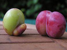 ябълка и слива