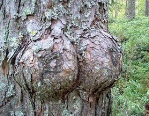 16.funny_pictures_This_must_be_a_female_tree