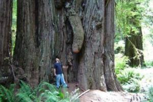 Funny-dick-tree