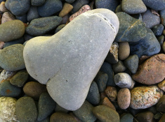 stock-photo-37409026-image-of-funny-rude-pebble-shaped-like-a-penis