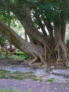 tree-gang